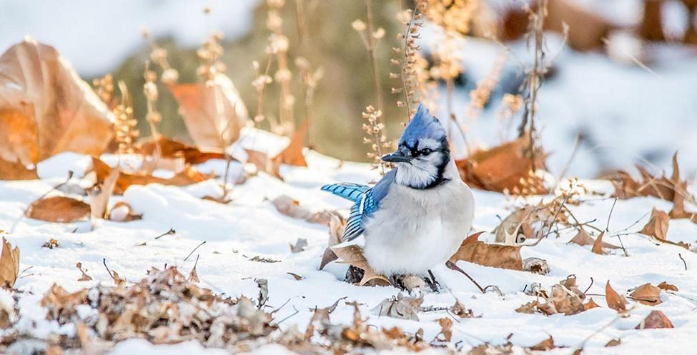 AudubonFallYardTip
