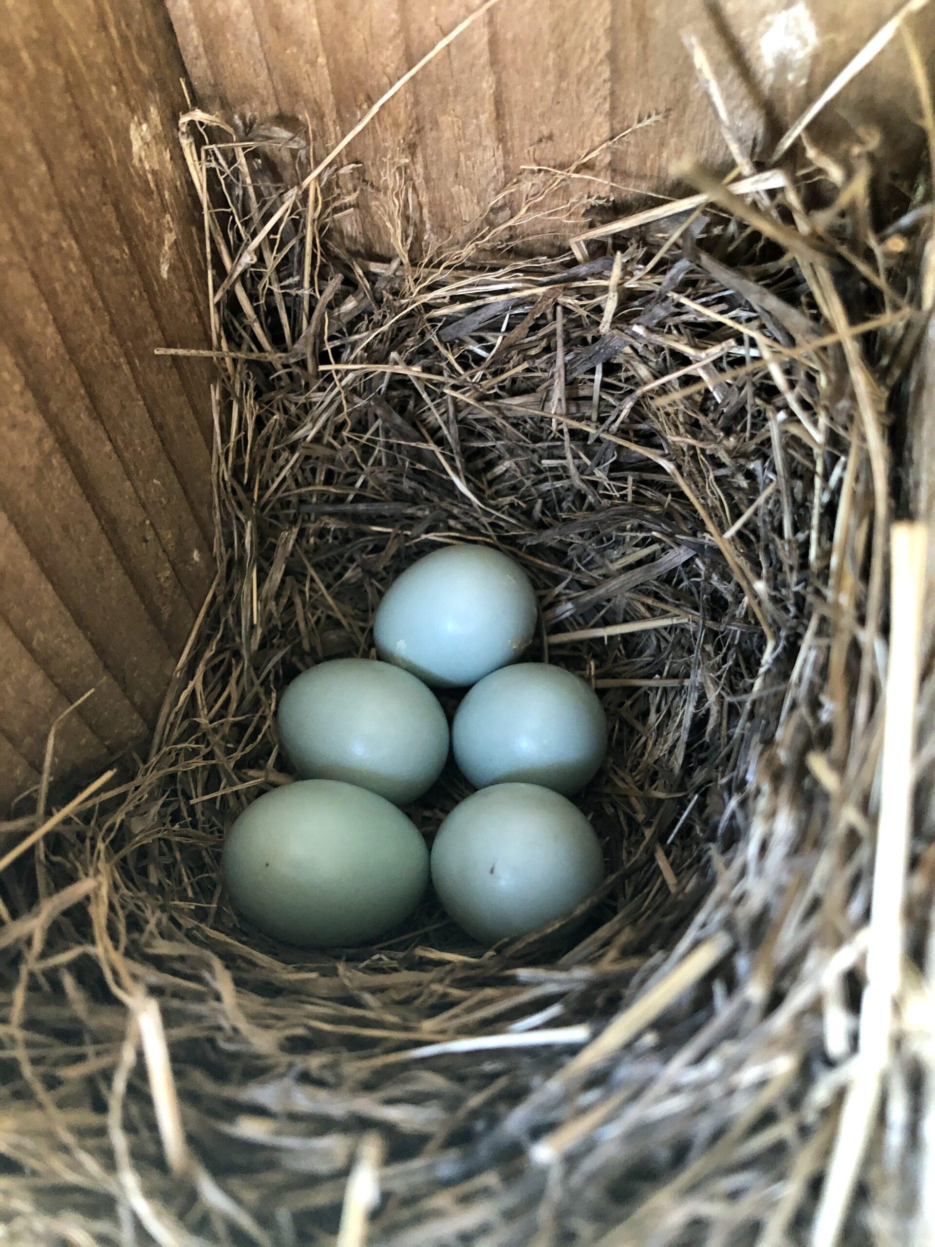 Gilbertson nest box